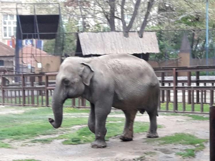 zoo_vrt_3